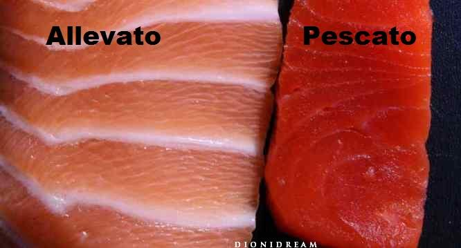 salmone-pescato-allevato