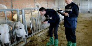 controlli-carabinieri-nas-carne-bovina